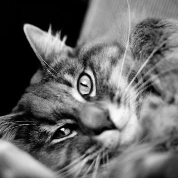 Tips om je katten (of andere huisdieren) te fotograferen